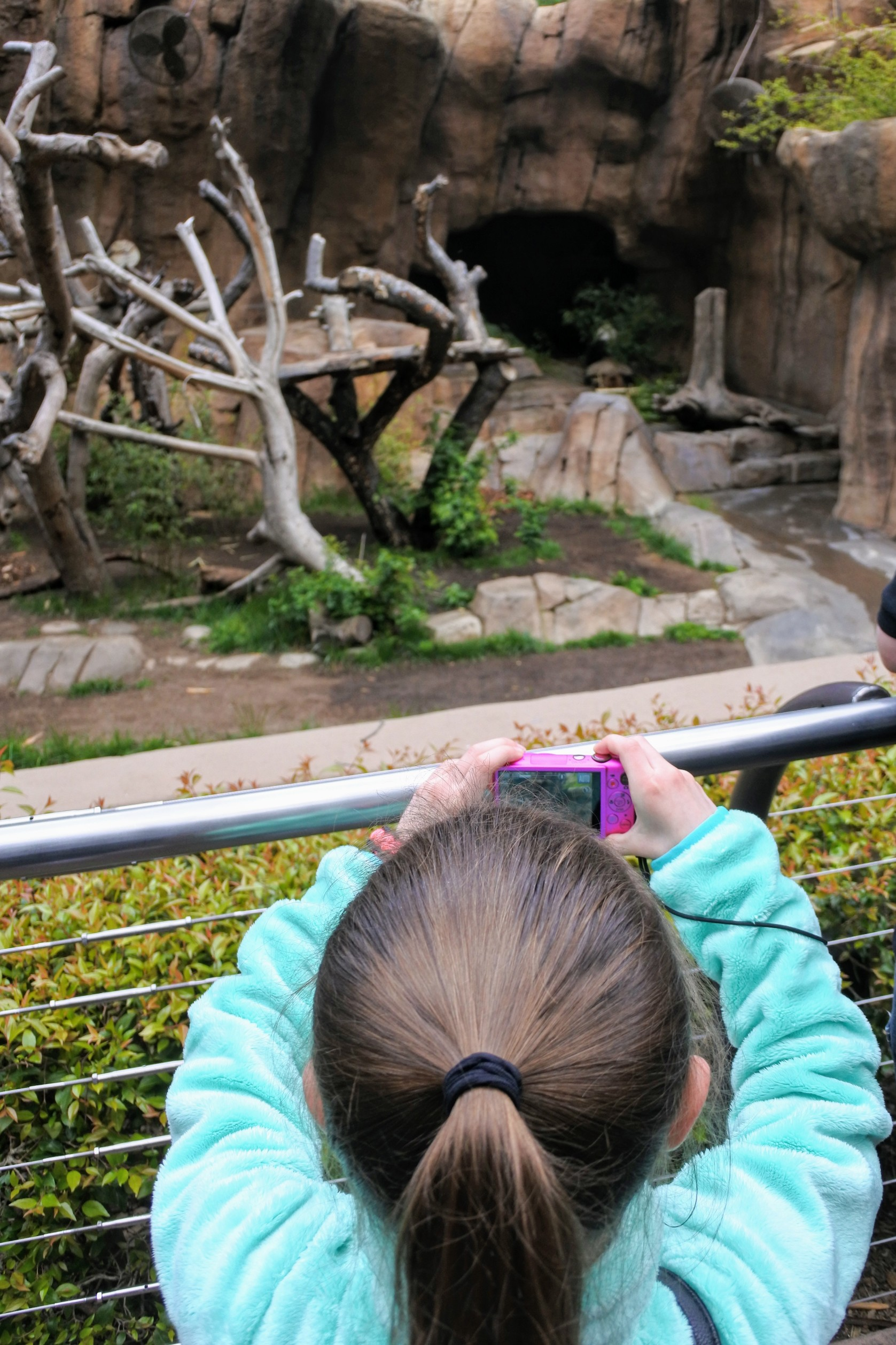 Are you thinking about skipping the famous San Diego Zoo because you are short on time? Don't! Find out how to do it all (well, almost all) in half a day when you visit the San Diego Zoo.