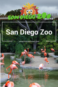 Are you thinking about skipping the famous San Diego Zoo because you are short on time? Don't! Find out how to do it all (well, almost all) in half a day.