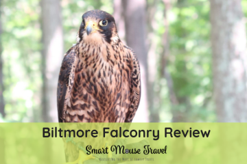 Our Biltmore Falconry review has an overview of our Biltmore Falconry experience plus tips and things I wish I had known before we went.
