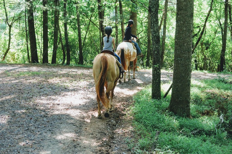 The Biltmore Guided Trail Ride was one of our favorite Biltmore Estate experiences. Find out what to expect when taking a Biltmore horseback ride. #biltmore #familytravel #northcarolina #travelwithkids #horsebackriding