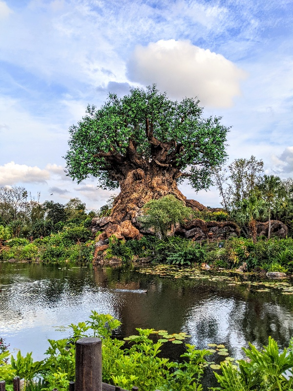 Animal Kingdom Tree of Life with blue skies and clouds. Is it worth it to stay at a Disney World resort? Here's what you should consider before booking a stay off-site for Disney World.