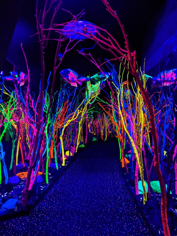 Blacklit walkway with brightly colored coral along sides and fish above.
